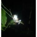 borneo night trek